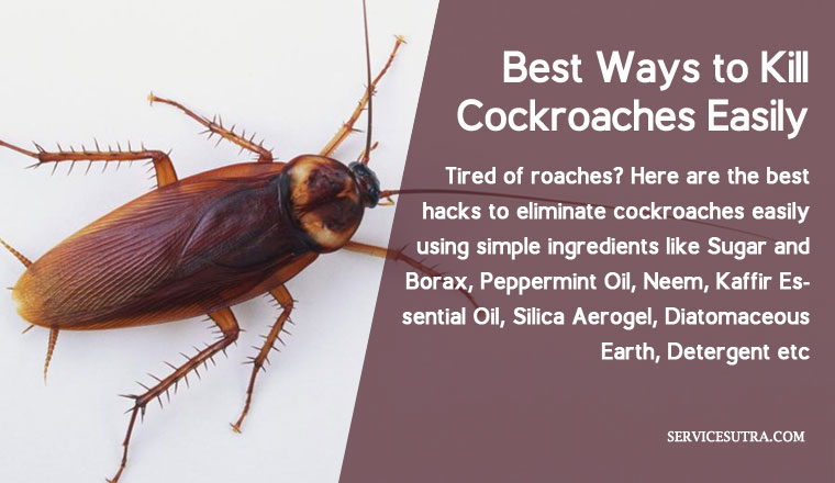 The Super List Of 19 Best Ways To Kill Cockroaches Easily At Home