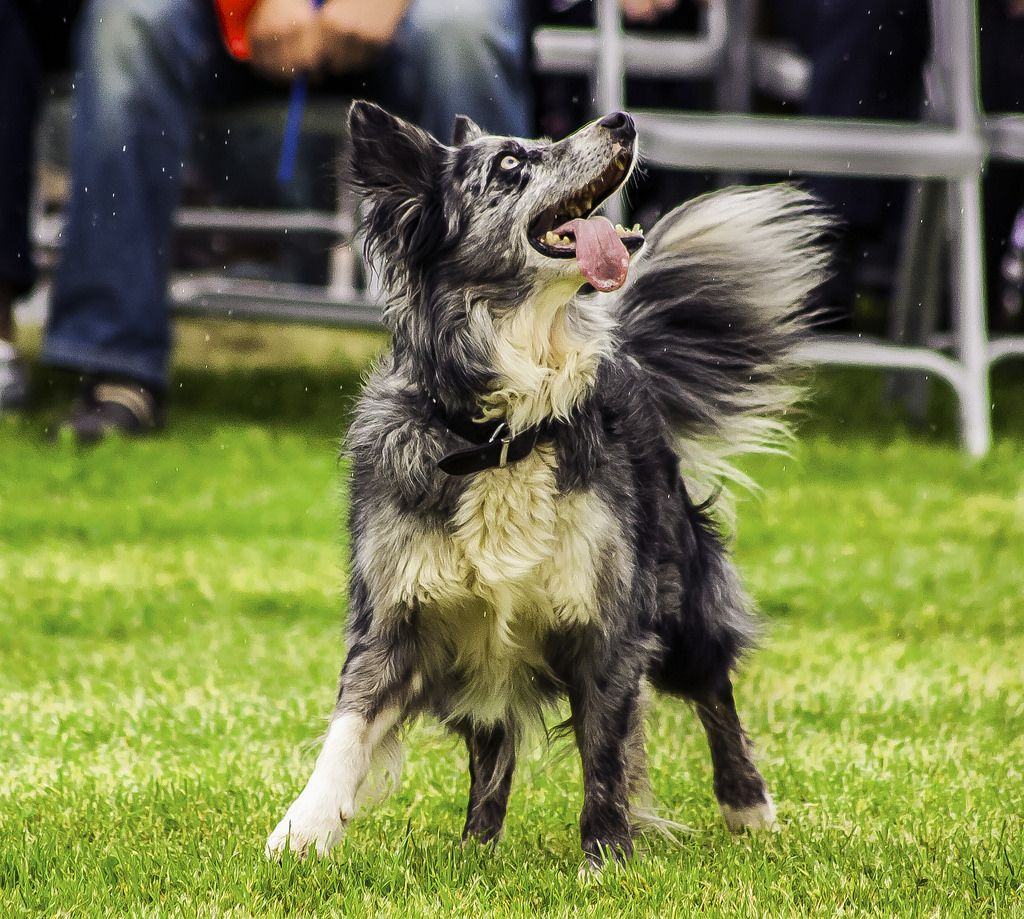Dog Memes Dog Breeds Dog Kennel Ideas Dog Bed Dog House Dogs