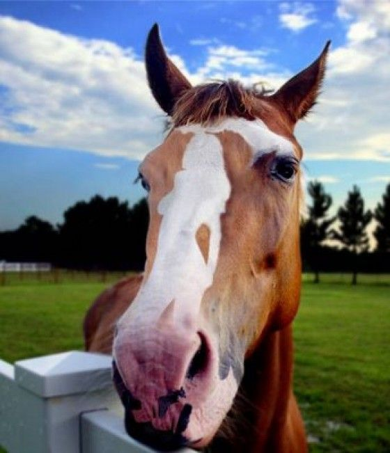 horse with lady on nose - Google Search