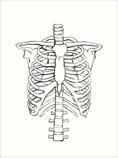 Lamina Artistica Caja Toracica De Jero Skeleton Drawings Rib Cage Drawing Anatomy Art