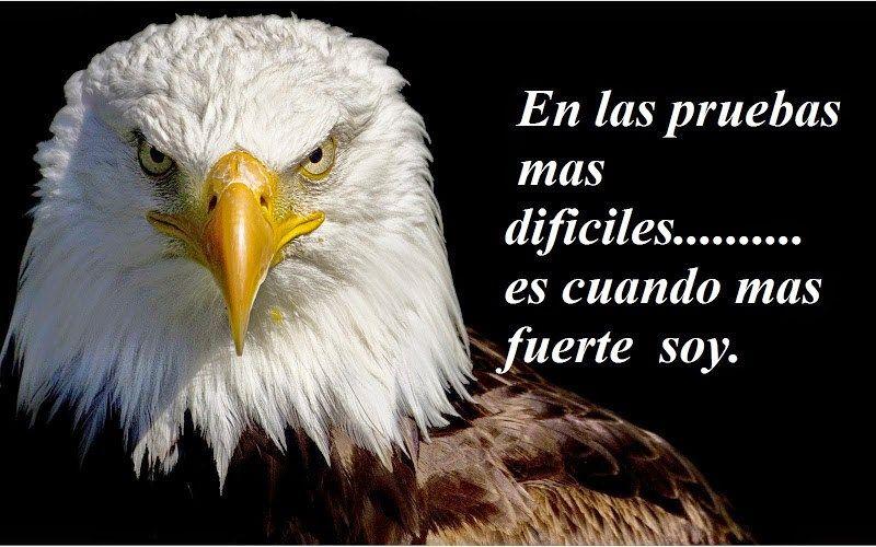 Imagenes De Aguilas Con Bonitas Frases De Superacion Para