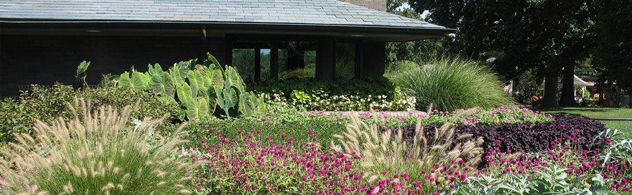 Online gardening tool -- Missouri Botanical Garden\'s Plant Finder ...