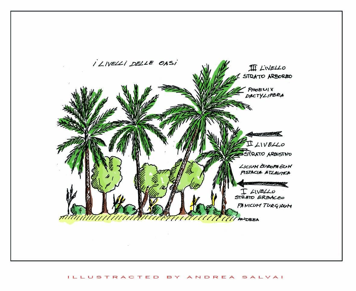 Illustrazione realizzata sul campo per una ppubblicazione su un progetto riiguardante la desertificazione Sardegna-tunisia
