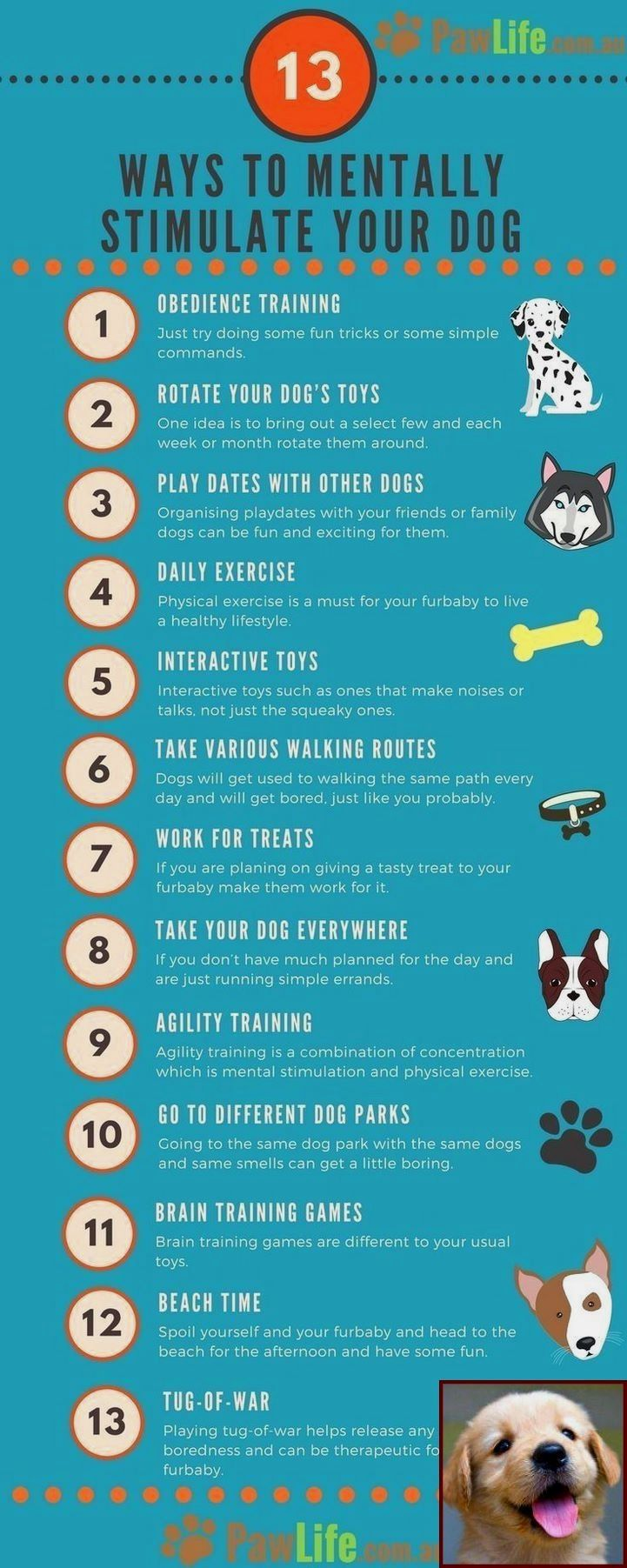 Dog Behavior Training Cost And Clicker Training Dogs To Come