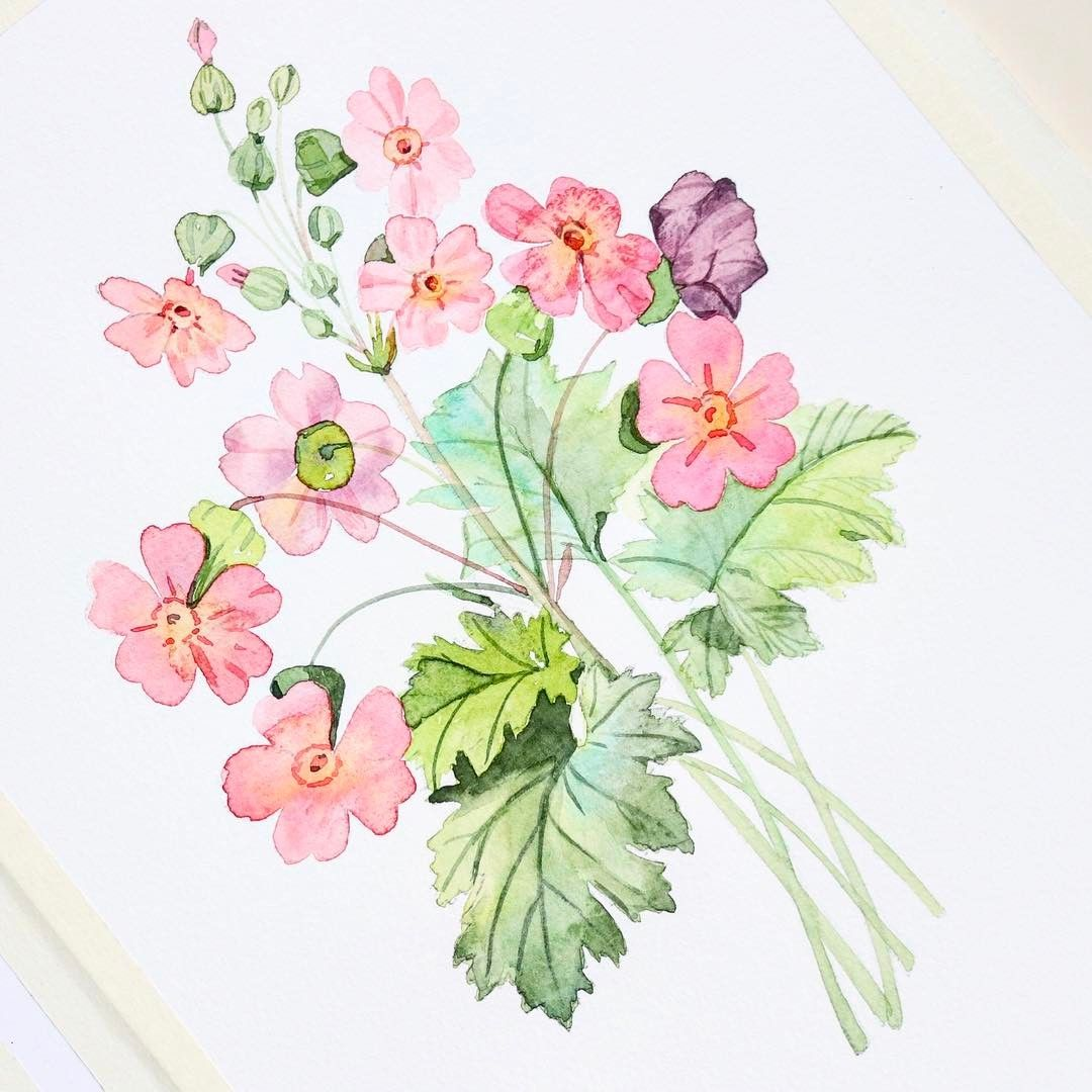 Diy Watercolor Tutorials Pencil In Sketch Botanical Watercolor