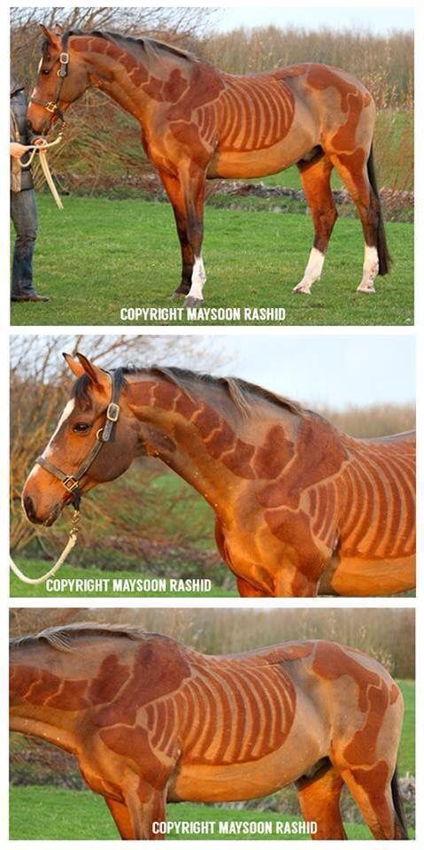 skelett - Pferd Scheren Muster