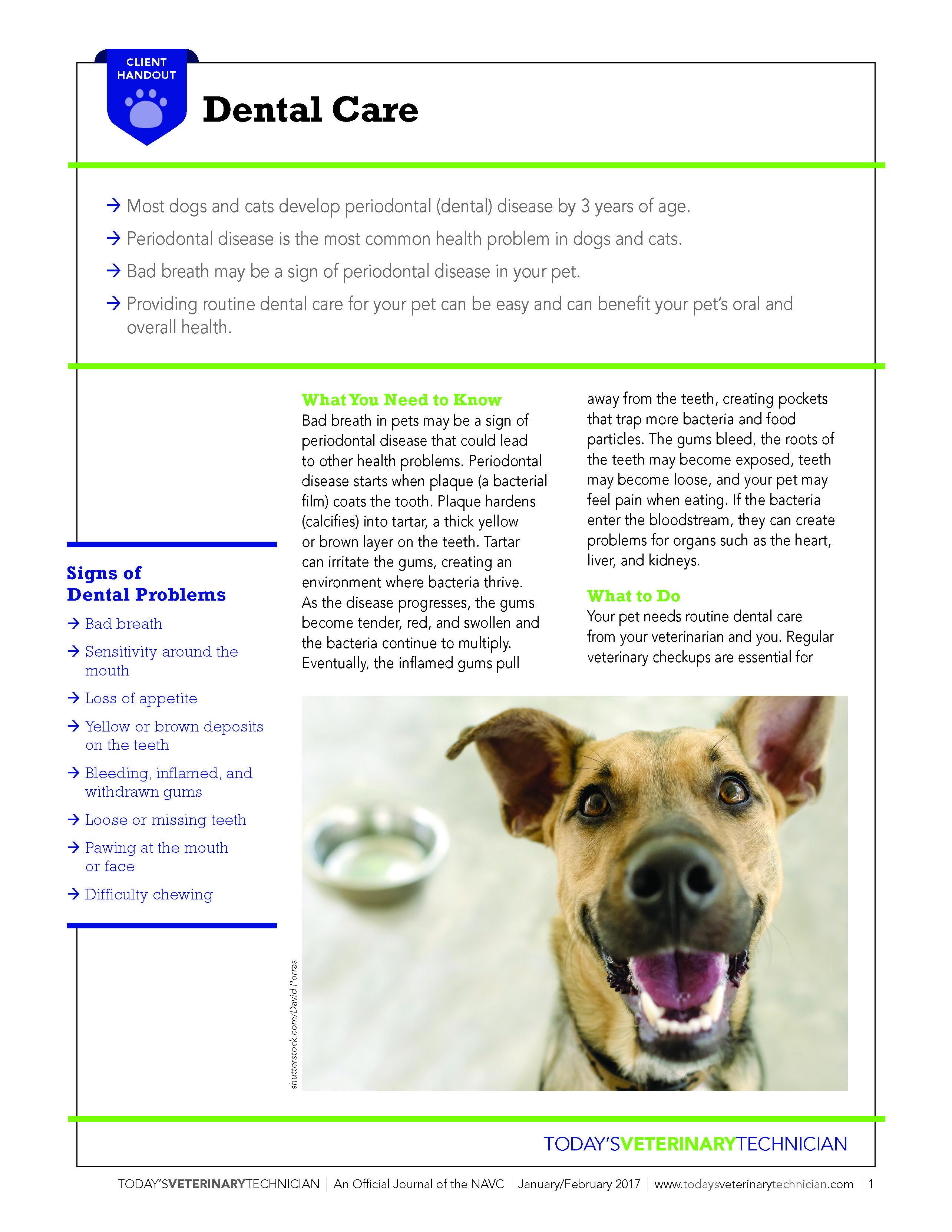 Pet Dental Care In 2020 Pet Dental Care Dental Care Dental