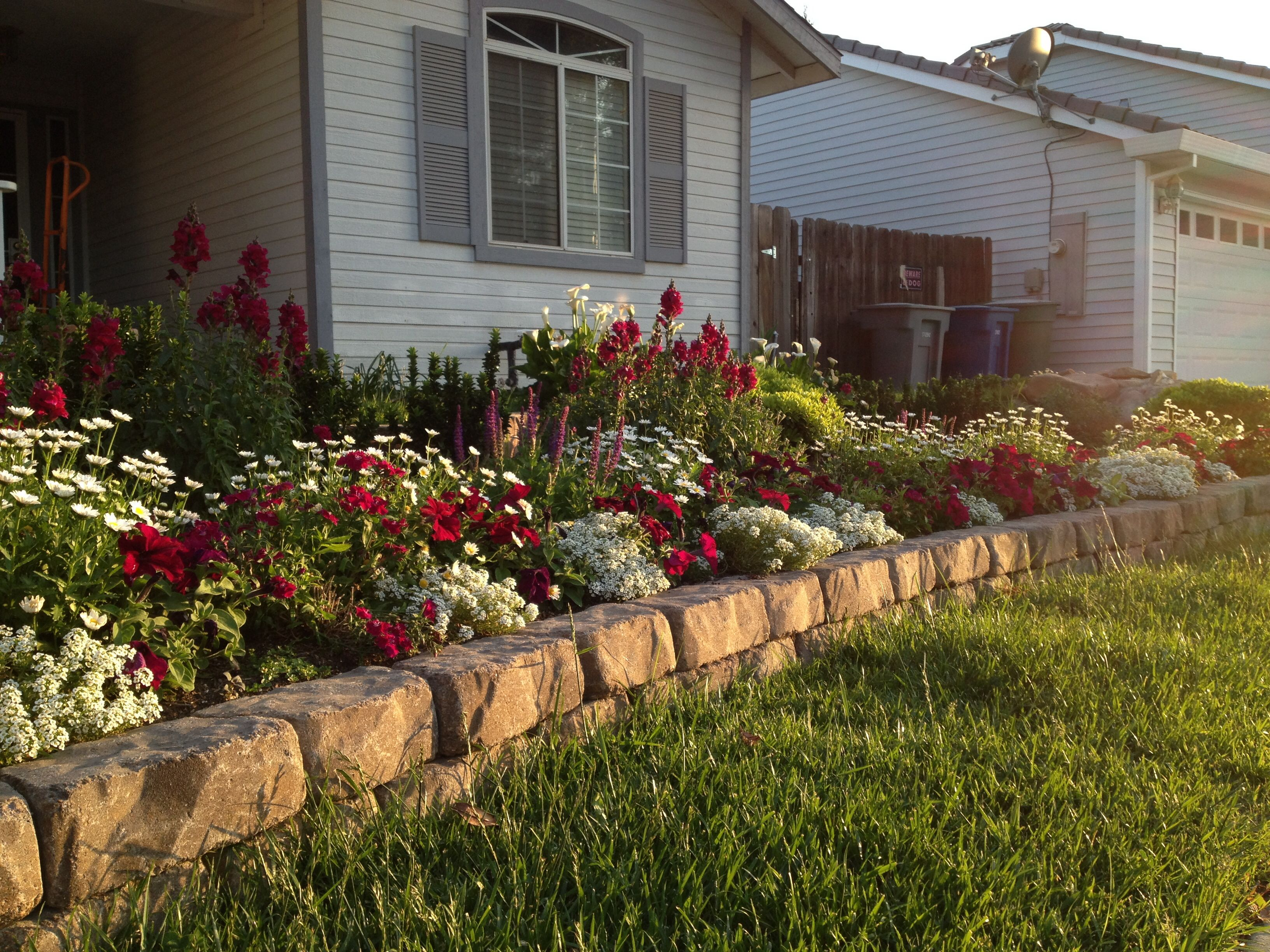 Easter flower bed: Calla Lillie\'s, Snapdragons, daisies, Petunias ...