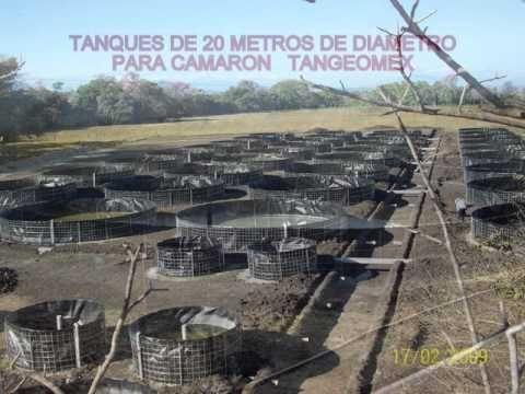 Fish farm tank tilapia and shrimp tangeomex eco aqua for Fish farm tanks