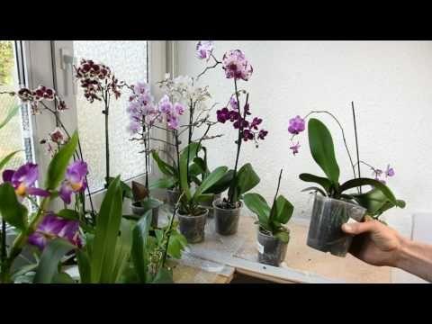 26 orchideen richtig pflegen gie en und behandeln die wurzeln brauchen auch licht youtube. Black Bedroom Furniture Sets. Home Design Ideas
