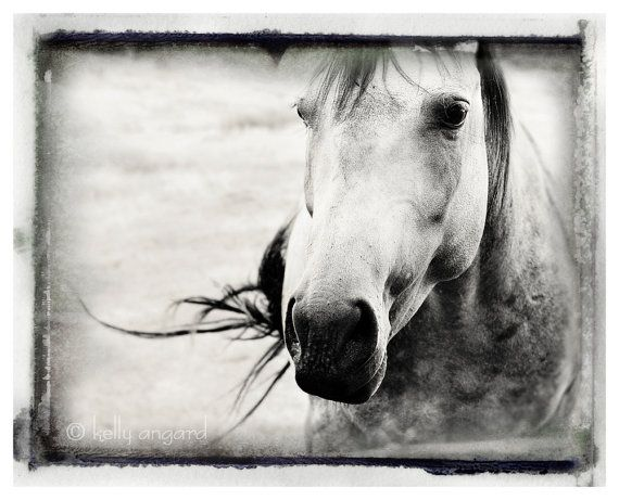 Horse photography horse photograph black and white photo wild spirit horse animal nature fine art