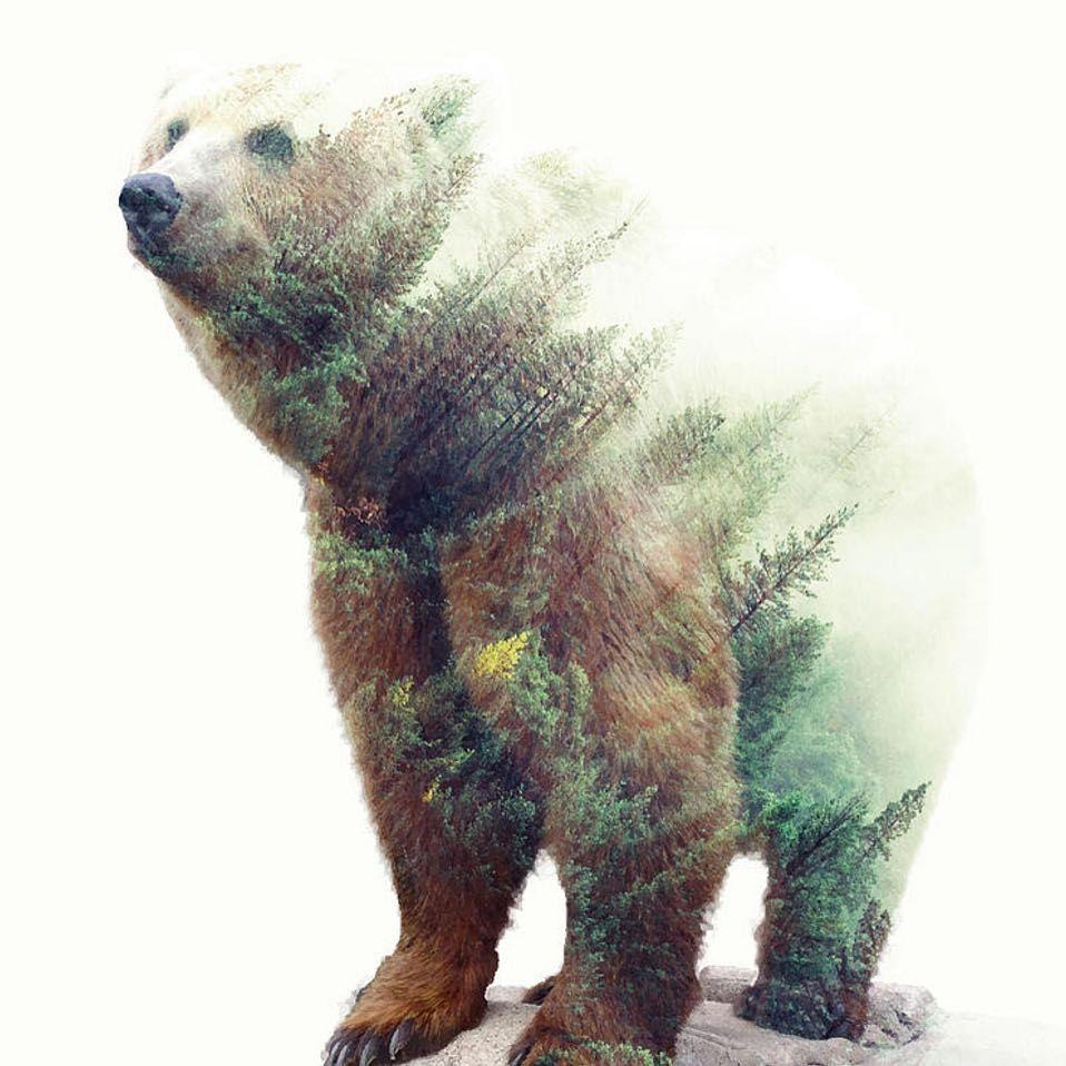 No Photo Description Available Bear Tattoos Bear Art Animal Tattoos