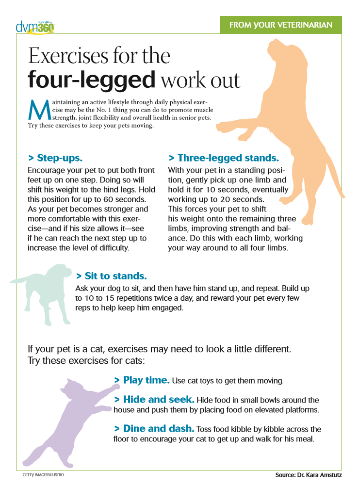 Lack of mobility may mean less quality time with your pet