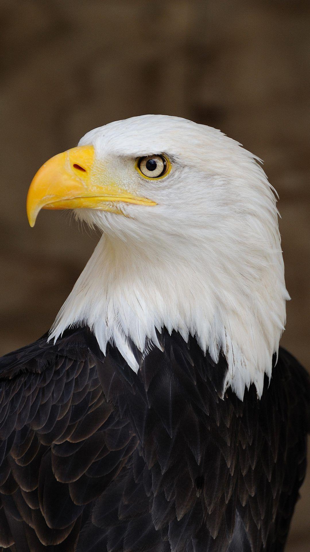 Wallpaper full hd 1080 x 1920 smartphone eagle america