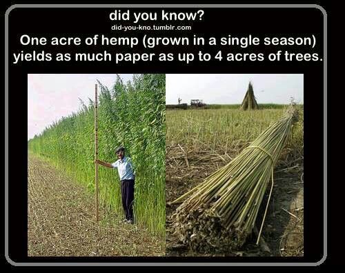 Hemp for paper! #sciencehistory