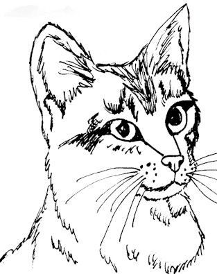 Realistic Cat Coloring Pages Printable Cat Coloring Page Animal