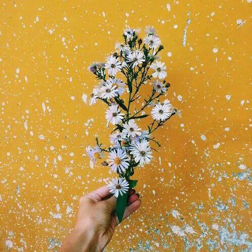 Beautiful White And Flowers Image On We Heart It