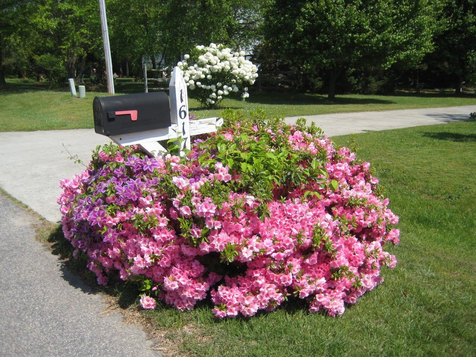 Pink Flowering Bushes And Clematis Around Mailbox Gardening