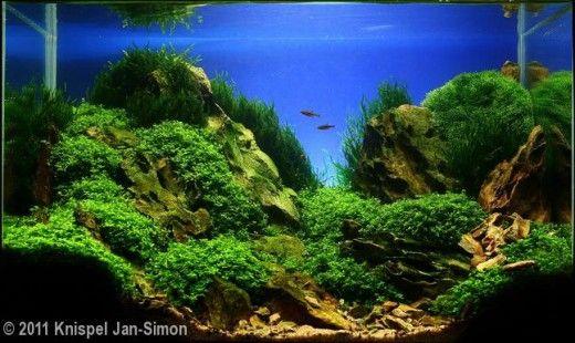 Planted Aquarium Substrate Aquascape Planted Aquarium Aquarium Sand