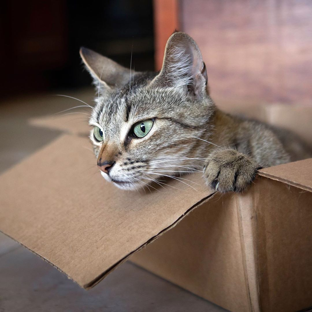 Cherish S Kitties On Instagram Halp Dis Box Party