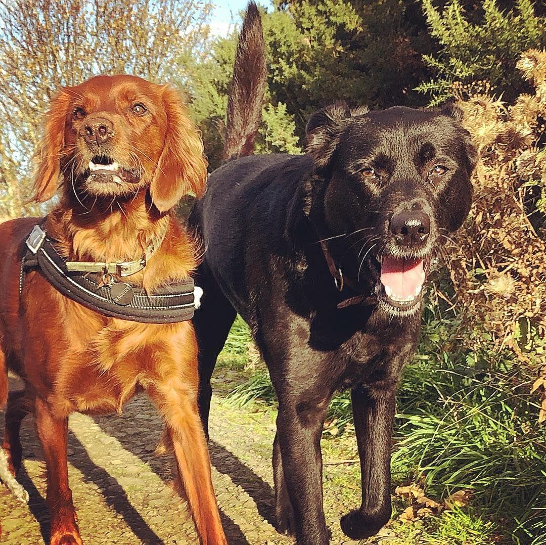 dog dogsofinstagram edinburgh thisisedinburgh