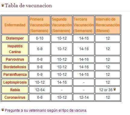 Calendario Vacunas Perros.Calendario De Vacunas Para Perros Y Cachorros Zonaperro Com