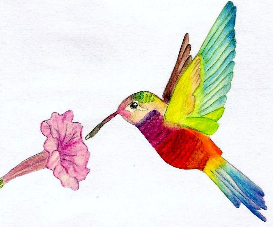 """Hummingbird 1"" by Helen Shellard, Easy Art Drawing ..."