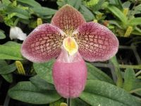Pin On Plants Orchids And Greenhouse