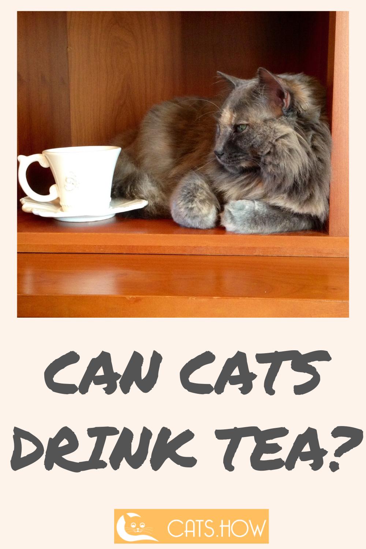 Cats How Understanding Cats Cat Drinking Drinking Tea Cats