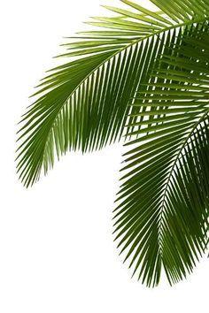 Tropical Palm Leaves Mural Google Search Botanical Wallpaper