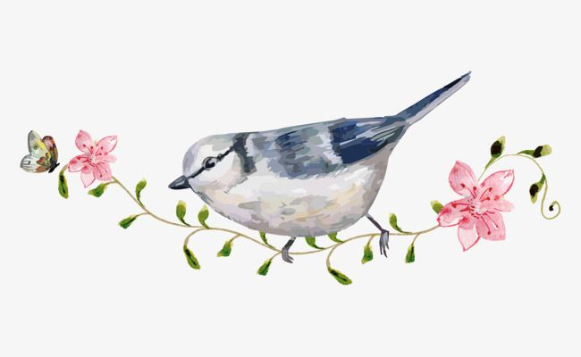 Cartoon Bird Flowers Hand Painted Watercolor Station Branches
