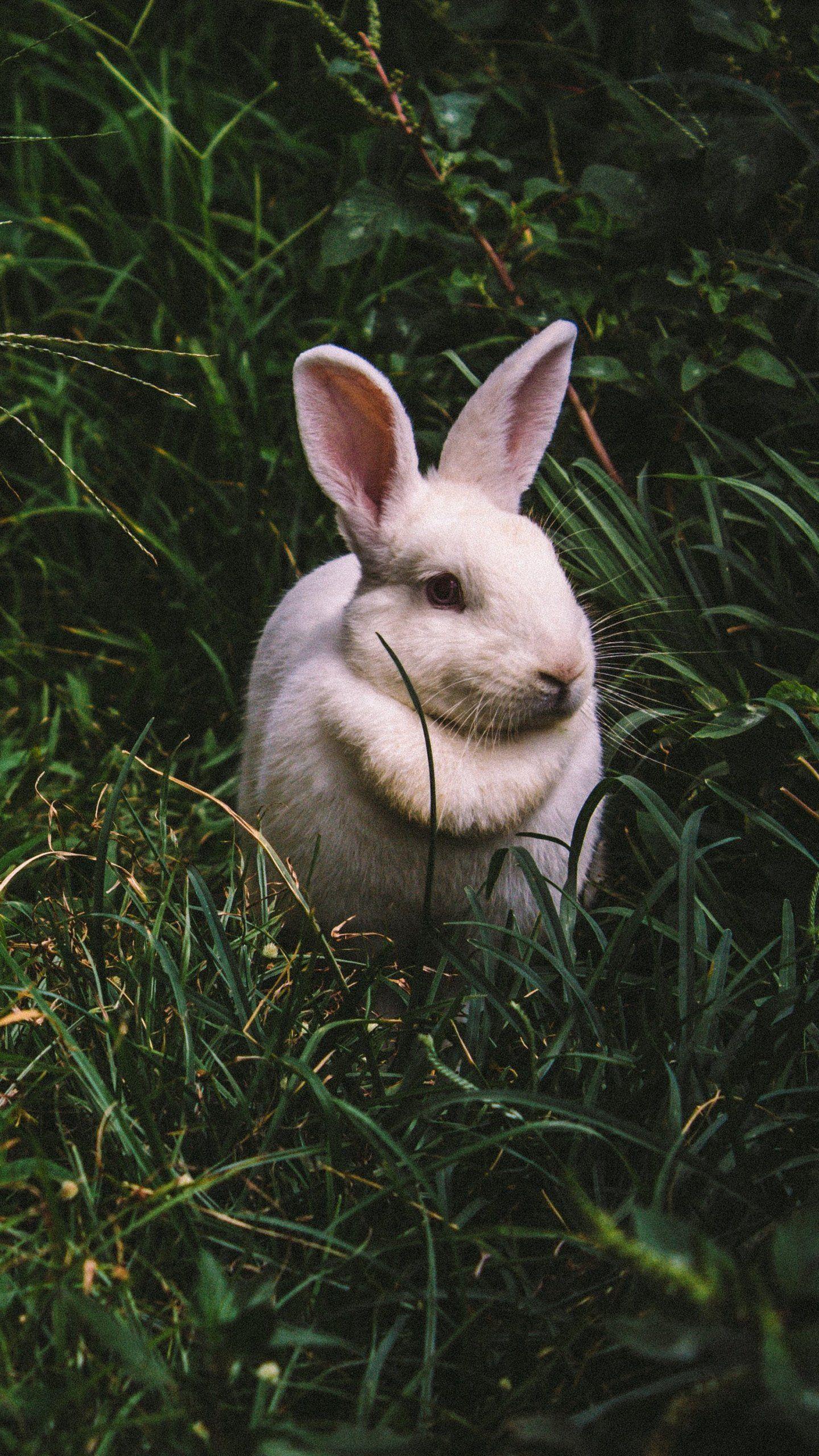White Rabbit Wallpaper Iphone Android Desktop Backgrounds Rabbit Wallpaper Wildlife Wallpaper Animals