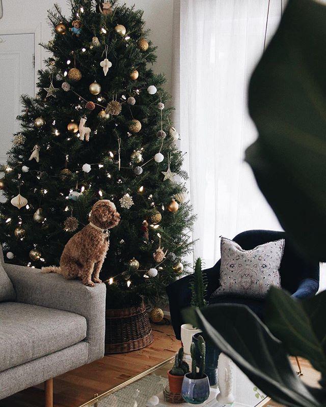 West Elm Christmas.One Week Charlodussault Anxiouslyawaiting