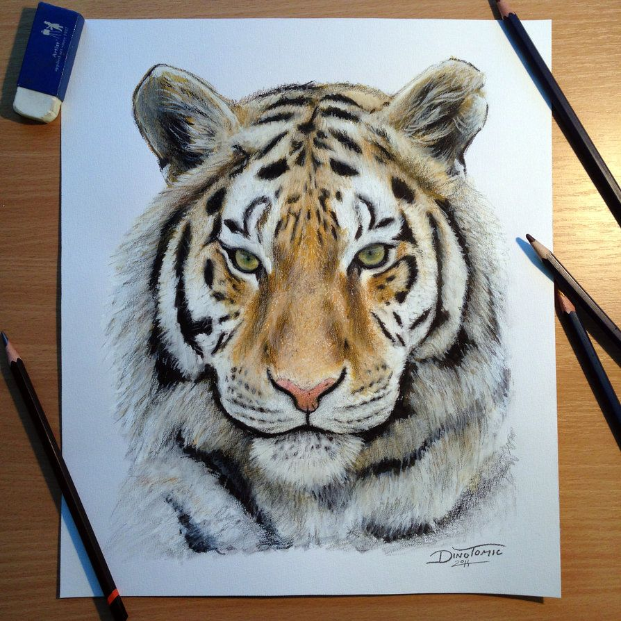 Tiger pencil drawing by atomiccircus animalart art animals