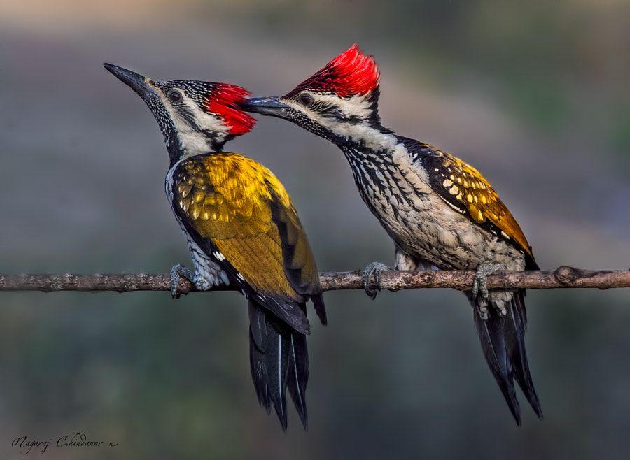 In a playful mood by Nagaraj Chindanur - Photo 207278381 / 500px