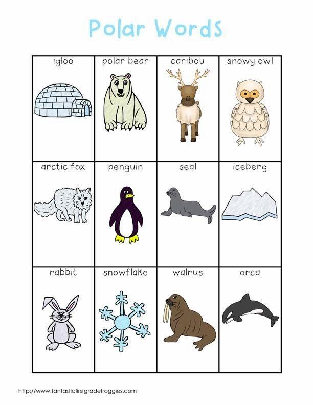 polar animals writing center words primary grade science fun pinterest polar animals. Black Bedroom Furniture Sets. Home Design Ideas