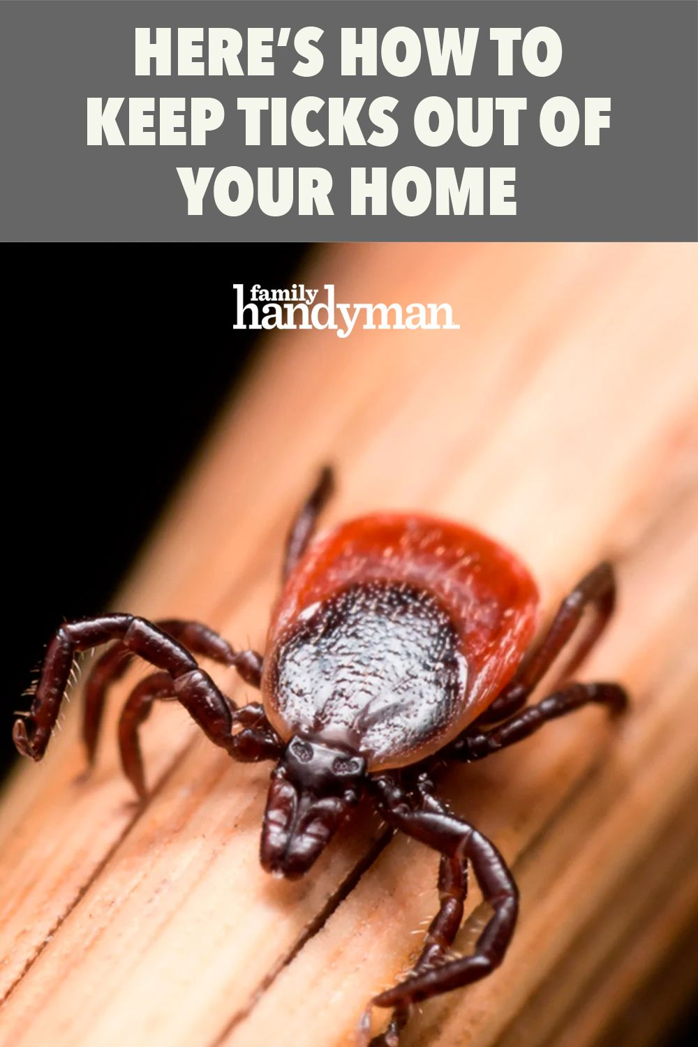f896e98742d3eb3584a9c3b2c0751a5b - How To Get Rid Of Ticks In Your Bed