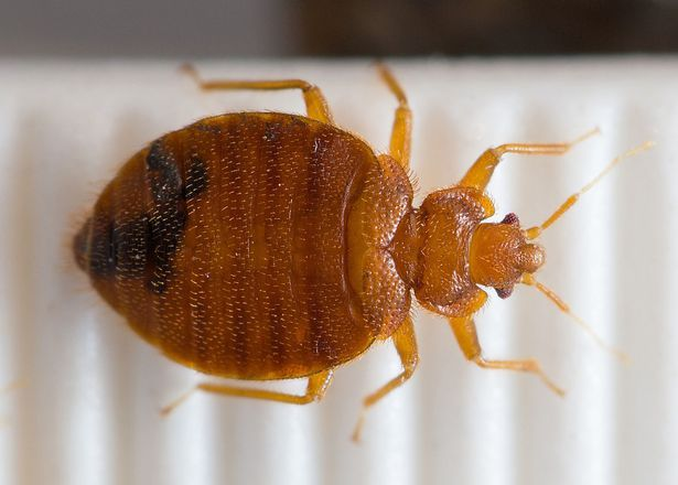 Amazing Bedroom Guardian Reviews ~ Is This Product EFFECTIVE At Getting Rid Of Bed  Bugs For Good?