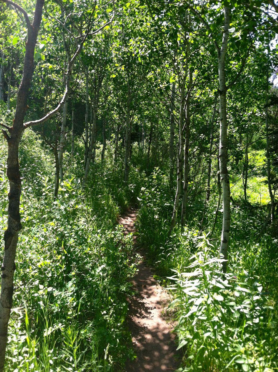 Hiking in toll canyon summertime wildflowers in utah