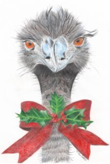 Emu. Unique Australian Animal Christms cards from Brisbane ...