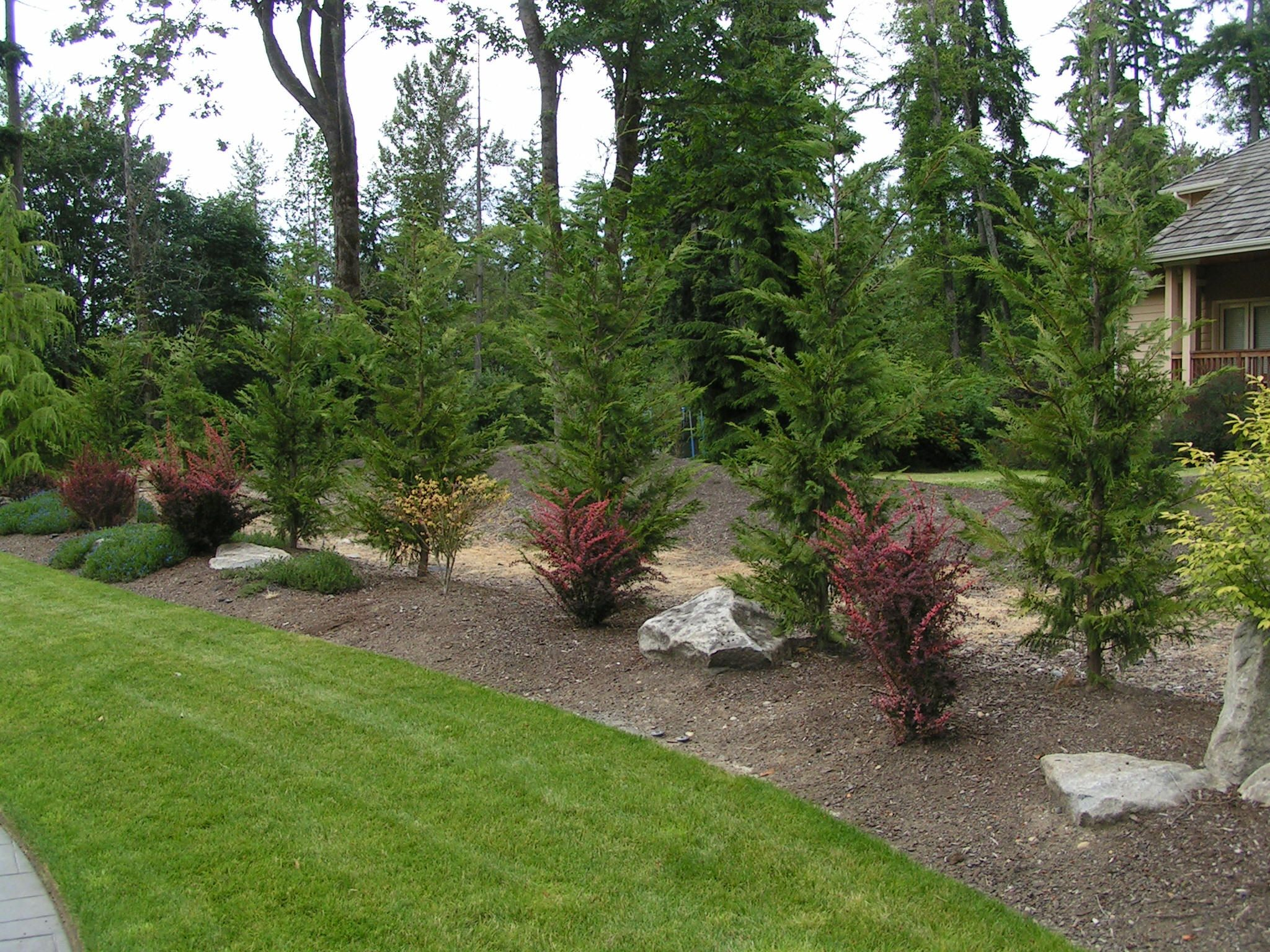 Leyland cypress landscape ideas leyland cypress placed for Medium back garden designs