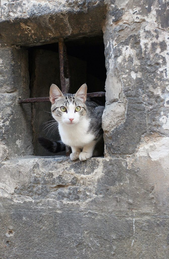 https://flic.kr/p/3T1kaK | Le Mans Chat | Un petit chat qui regarde passer les touristes, Le Mans France été 2007. A small cat who watches crossing tourists, Mans France summer, 2007. Un pequeño gato que observa pasar a los turistas, el Mans Francia verano 2007.  Explore Nov 6, 2007 #459