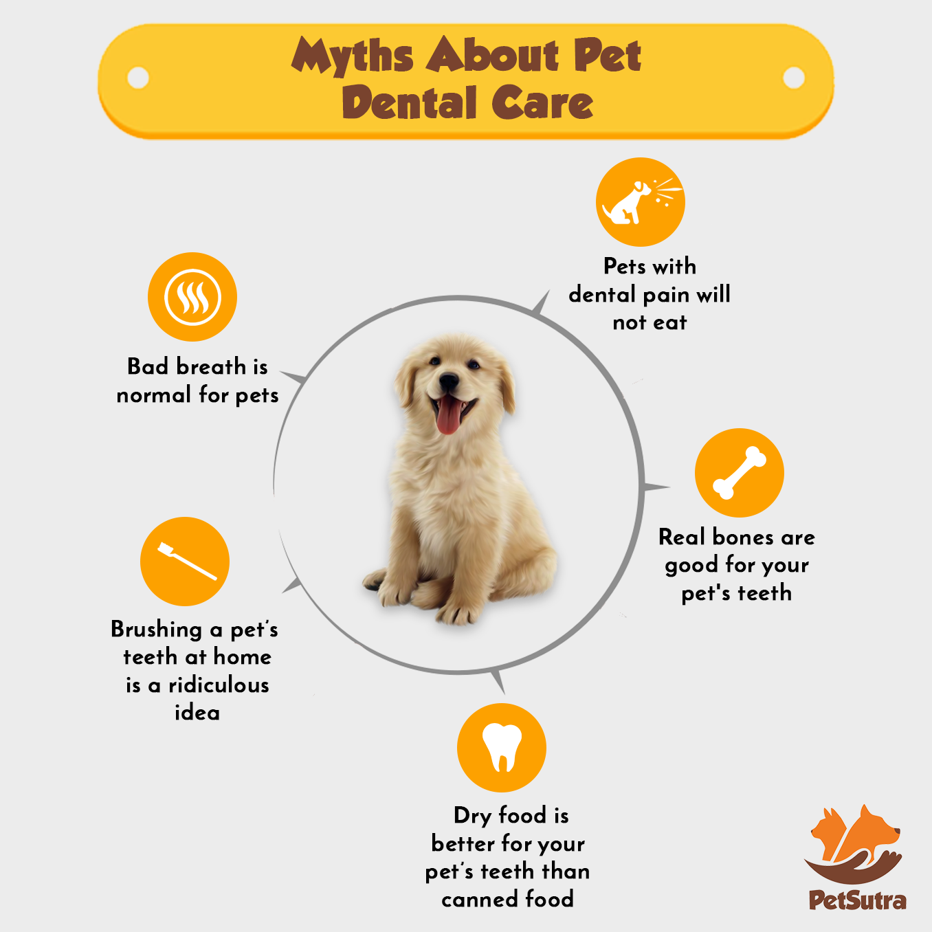 Idea By Petsutra On Pet Care