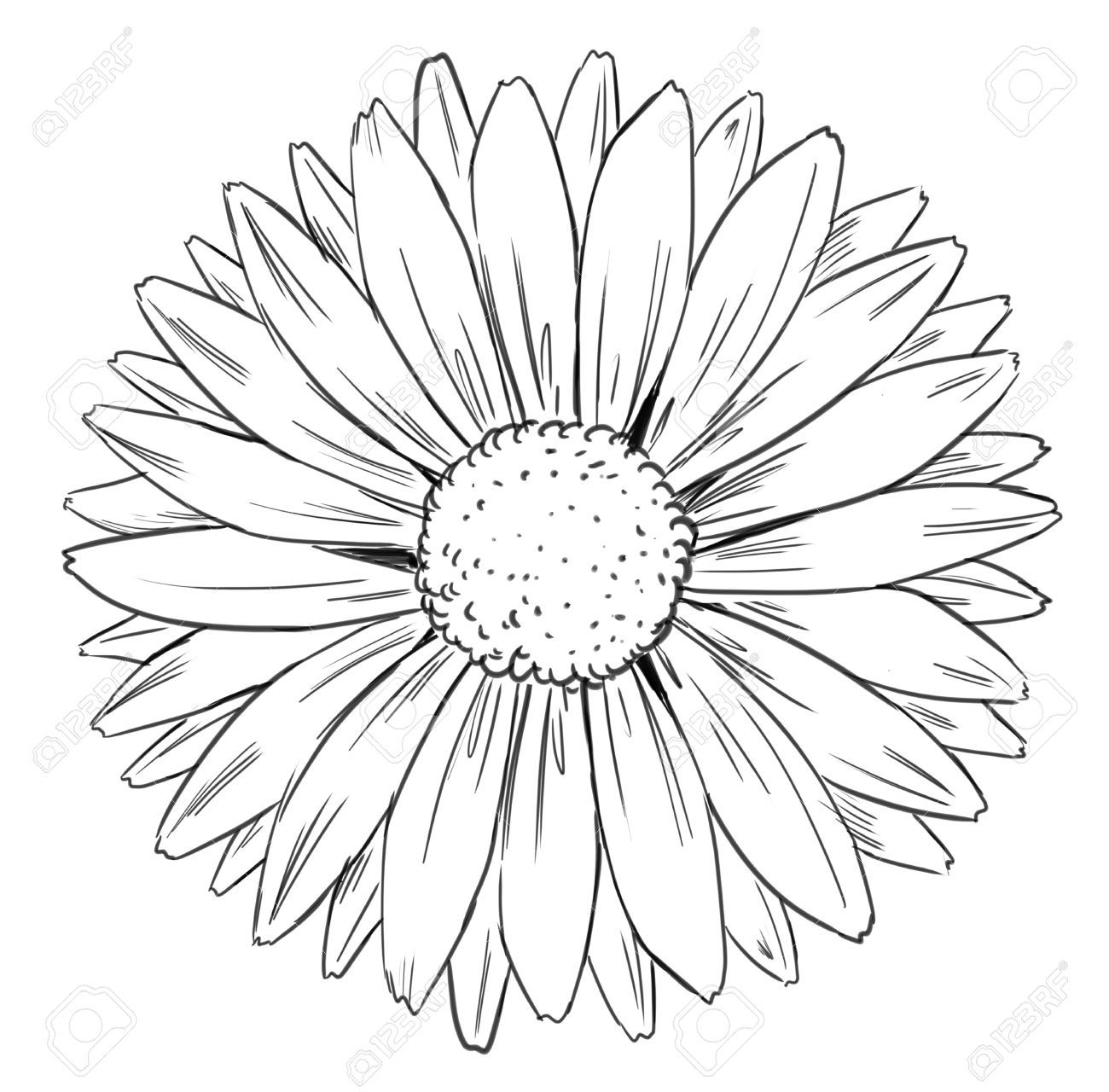 Sunflower Flower Essay