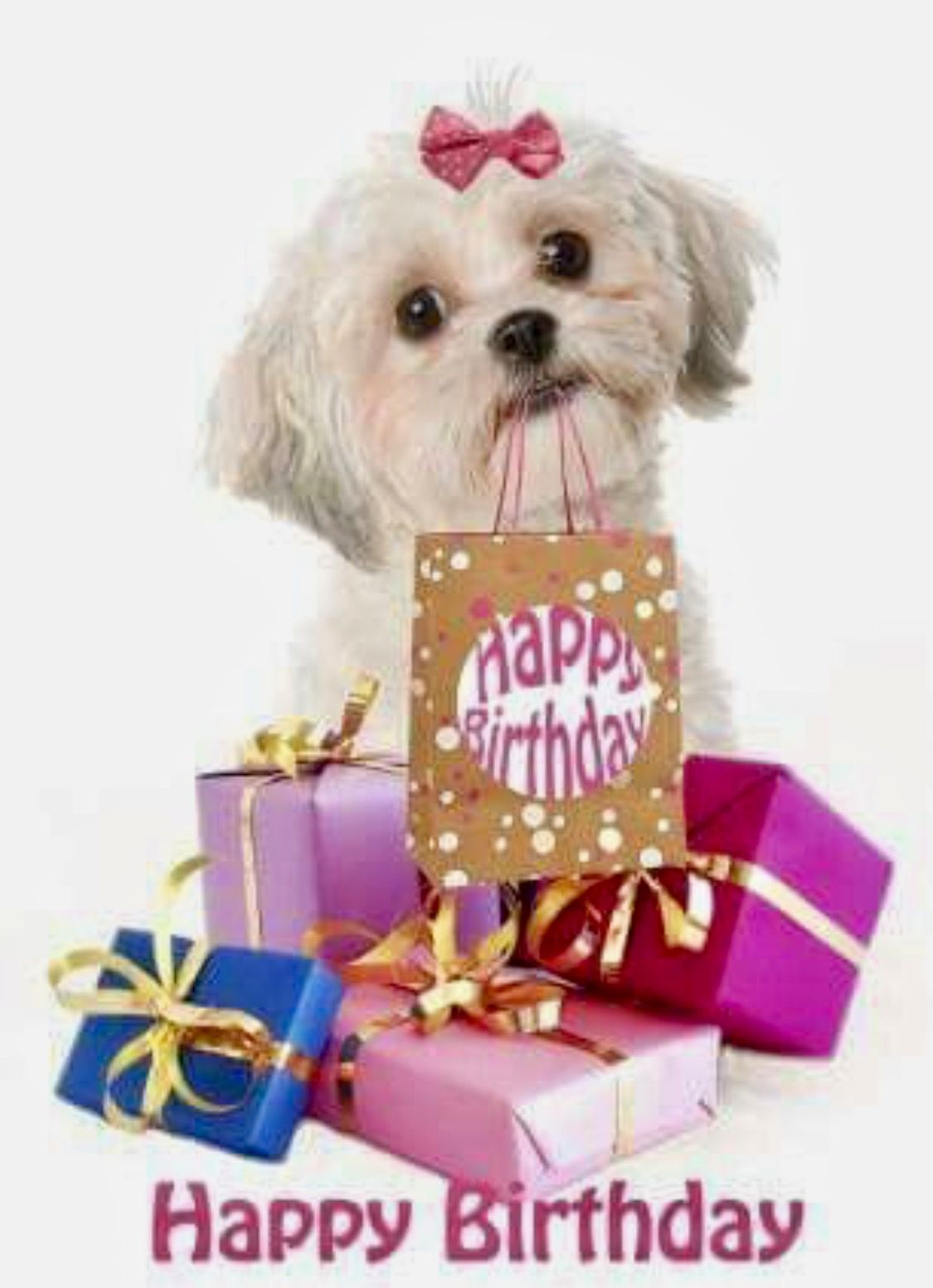 Pin by gary and pat phillips on birthday wishes pinterest happy birthday dog happy birthday images birthday messages birthday wishes dog friends shopping shih tzu birthdays doggies kristyandbryce Choice Image
