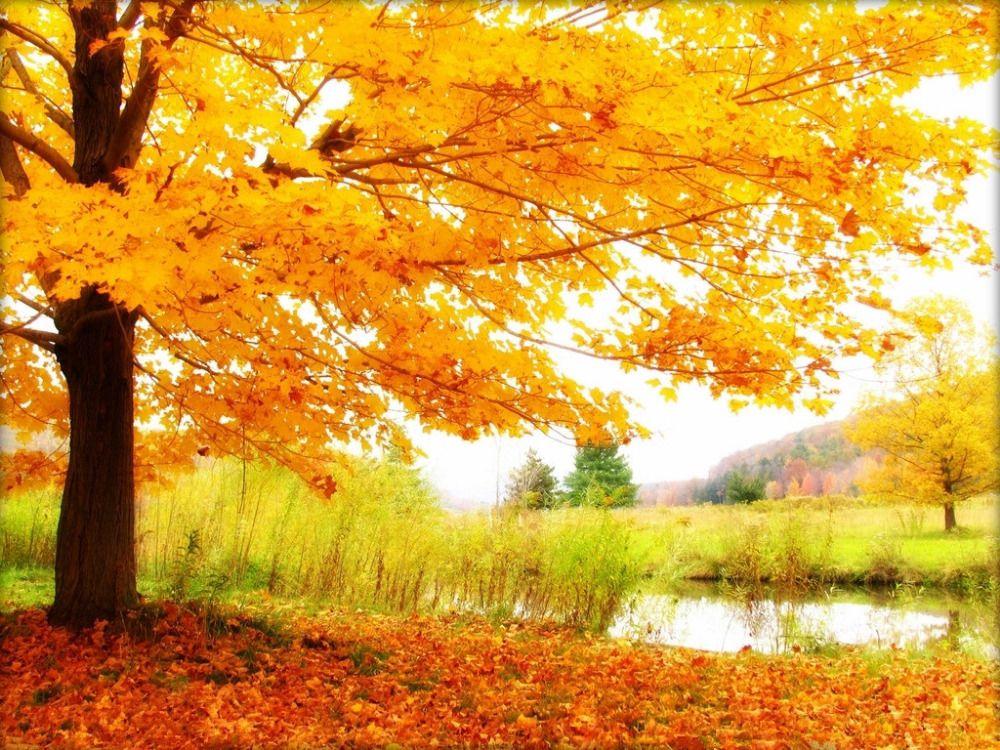 Autumn Theme Vinyl Custom Photography Backdrop Prop Photo Studio Backgrounds Qt29 In Background From Co Scenery Wallpaper Landscape Wallpaper Autumn Landscape