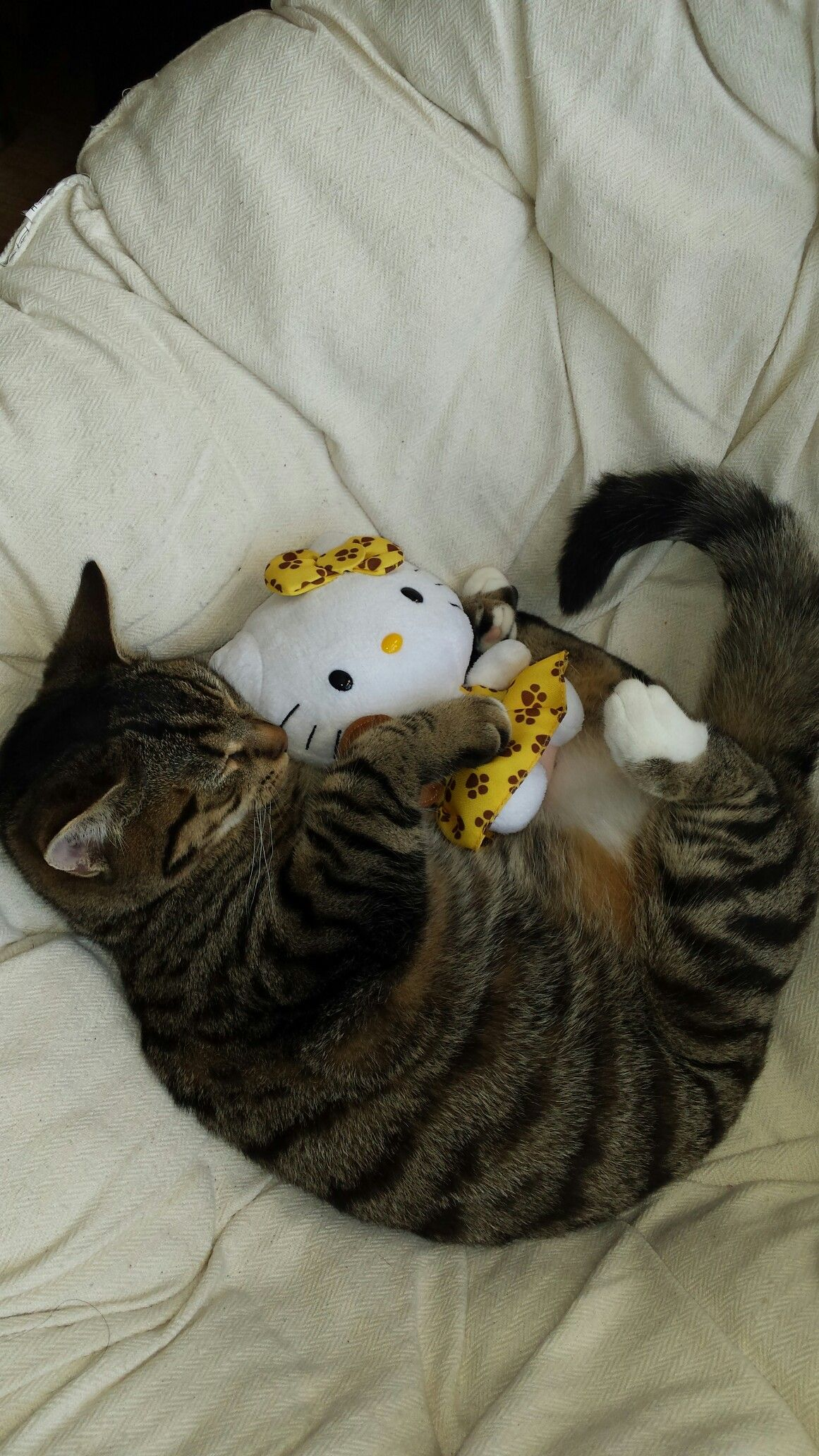 Kitten Mickey playing with my Hello Kitty