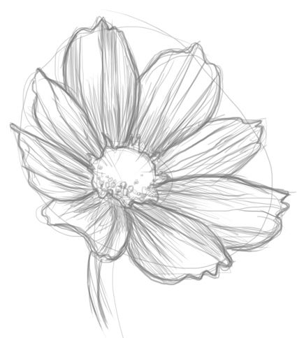 How To Draw Flowers I Already Know How To Stay A Flower But I Still Think It S Pretty Flower Sketches Drawings Flower Drawing Tutorials