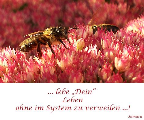 """... #lebe """"Dein"""" #Leben ohne im #System zu #verweilen ... !"""