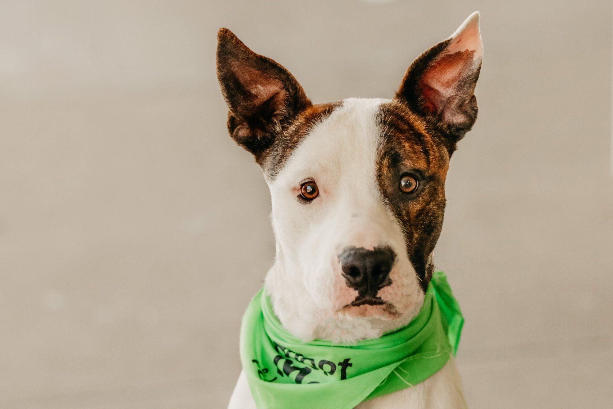 Adopt Spike on Help homeless pets, Homeless pets, Pets